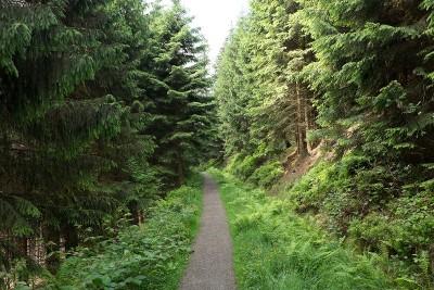 Einsamkeit, Harzer-Hexen-Stieg, 2017, Wanderung,